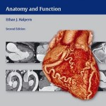 Clinical Cardiac CT: Anatomy and Function